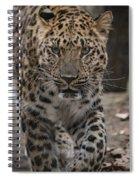 Jaguar On The Prowl Spiral Notebook