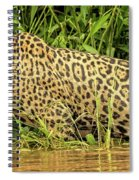 Jaguar Prowls The River's Edge Spiral Notebook