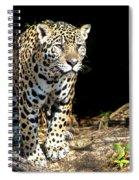 Jaguar Stare Spiral Notebook