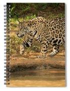 Jaguar Walking Beside River In Dappled Sunlight Spiral Notebook