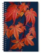 Japanese Maple Leaves In Autumn Spiral Notebook