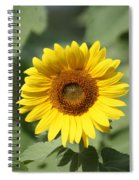 Jarrettsville Sunflowers - The Star Of The Show Spiral Notebook