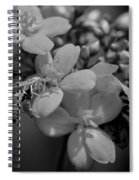 Jatropha Blossoms Wasp Painted Bw Spiral Notebook