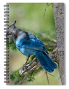 Jay Bird Spiral Notebook