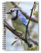 Jay In June Spiral Notebook