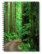 Jedediah Smith Redwoods                            Spiral Notebook