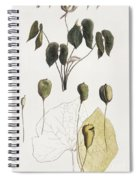 Jeffersonia Diphylla Spiral Notebook