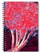 Jelks Fingerling 5 Spiral Notebook
