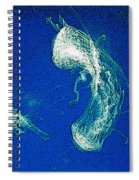 Jelly Fish In Bahamas Spiral Notebook