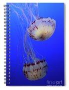 Jellyfish 1 Spiral Notebook