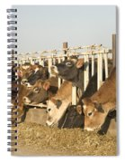 Jersey Cows Feeding Spiral Notebook
