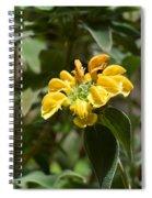 Jerusalem Sage Spiral Notebook