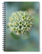 Jerusalem Sage Seed Head Spiral Notebook