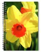 Jonquils Spiral Notebook