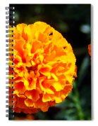 Joyful Orange Floral Lace Spiral Notebook