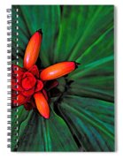 Joyful Spiral Spiral Notebook