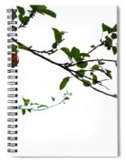 Juicy   A Tempting Photograph Of A Tasty Ripe Red Apple On A Tree  Spiral Notebook