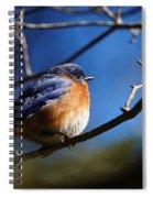 Juicy Male Eastern Bluebird Spiral Notebook