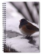 Junco Spiral Notebook