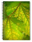 June 11 2010 Spiral Notebook