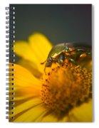 June Beetle Exploring Spiral Notebook