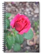 June Rose #5 Spiral Notebook