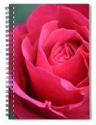 June Rose #8 Spiral Notebook