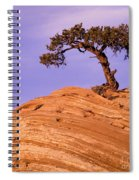 Juniper On Sandstone Spiral Notebook