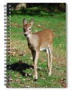 Just A Baby Spiral Notebook