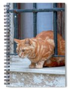 Just Curious Cat Spiral Notebook