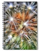 Just Dandy Spiral Notebook
