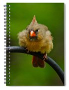 Just Doing A Little Feather Fluffing Spiral Notebook