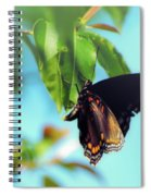 Just Hanging Out - Red-spotted Purple Butterfly Spiral Notebook