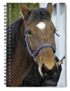 Just Horsing Around Spiral Notebook
