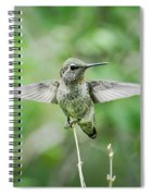 Just Spread Your Wings  Spiral Notebook