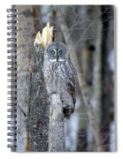 Just Us Tree Trunks Spiral Notebook