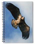 Juvenile Bald Eagle Two Spiral Notebook