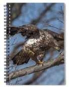 Juvenile Bald Eagle With A Fish Drb0218 Spiral Notebook