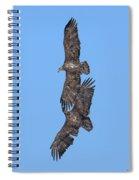 Juvenile Bald Eagles Drb0226 Spiral Notebook
