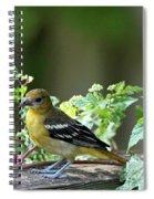 Juvenile Baltimore Oriole Spiral Notebook