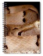 Juvenile Brazilian Lancehead Spiral Notebook
