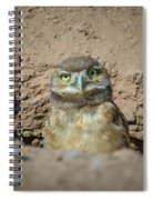 Juvenile Burrowing Owl-img_164817 Spiral Notebook