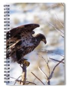 Juvenile Eagle Taking Off   Spiral Notebook
