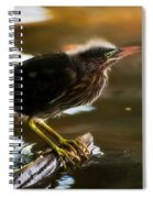 Juvenile Green Heron Spiral Notebook