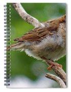 Juvenile House Sparrow Spiral Notebook