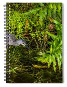 Juvenile Night Heron Spiral Notebook