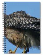Juvenile Red-shouldered Hawk Spiral Notebook