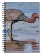 Juvenile Reddish Egret Spiral Notebook