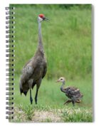 Juvenile Sandhill Crane With Protective Papa Spiral Notebook