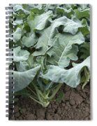 Kale Spiral Notebook